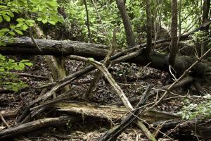 Die Gefahren im Wald