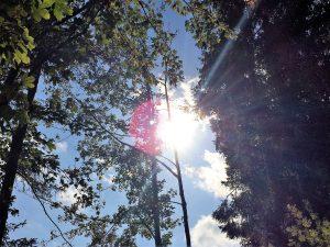 Gruntone Ein Interaktiver Baumlehrpfad Im Herzen Von Graz